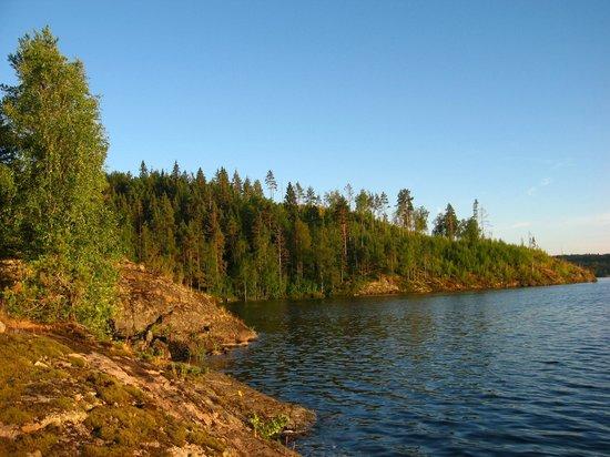 Ladoga Lake : Мох весь высох, жара 2010 год.