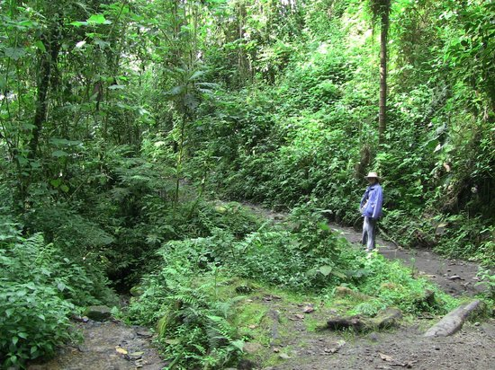 Parque Natural Chicaque: Near the bottom