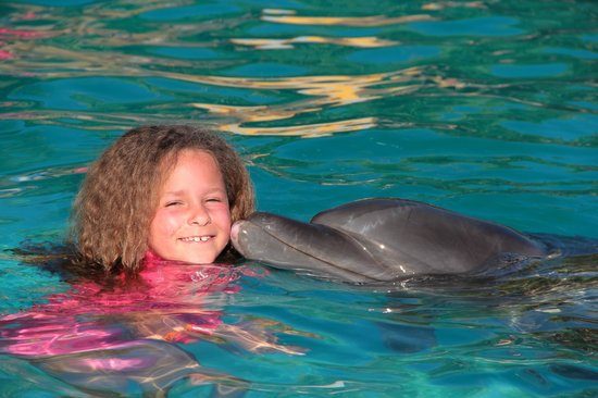 Marival Resort & Suites : dauphins(excursion)