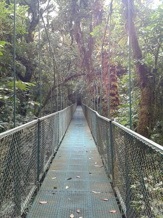 Parque Selvatura: bridges