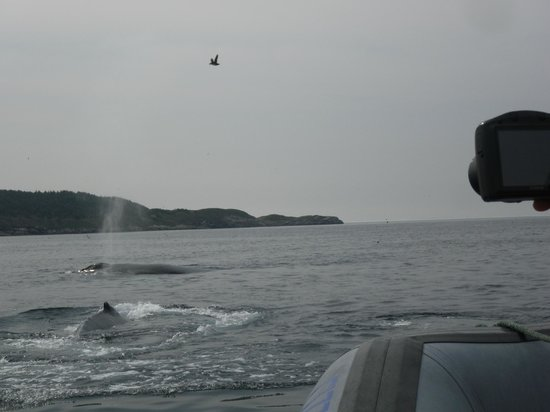 Elaine's Bed and Breakfast By The Sea: These humpback whales were so close to us!