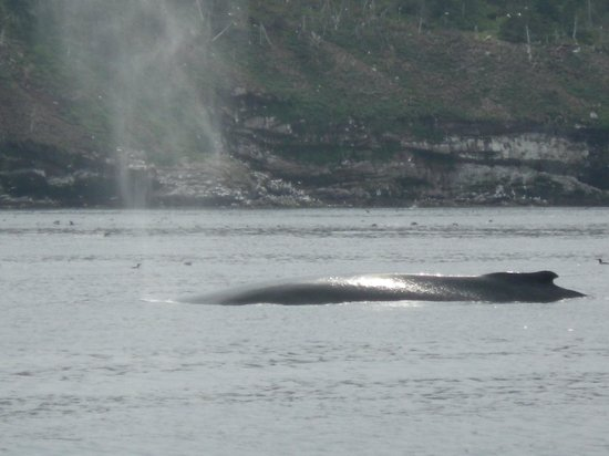 Elaine's Bed and Breakfast By The Sea: Humpback whale (blowing) picture taken from zodiac