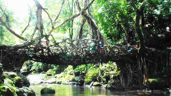 Mawlynnong Waterfall: The Living Root Bridge