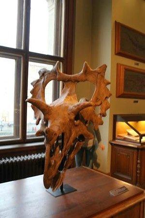 Muséum d'histoire naturelle de Vienne : Дино