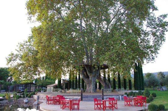 restaurant arbre photo de le domaine des and ols saint. Black Bedroom Furniture Sets. Home Design Ideas