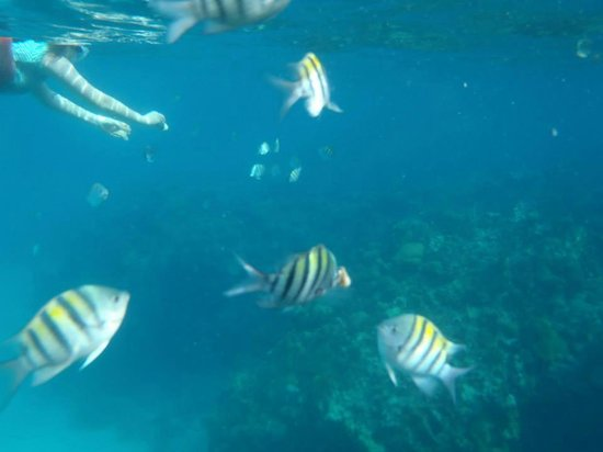 Sunscape Splash Montego Bay: snorkelling excursion from the hotel