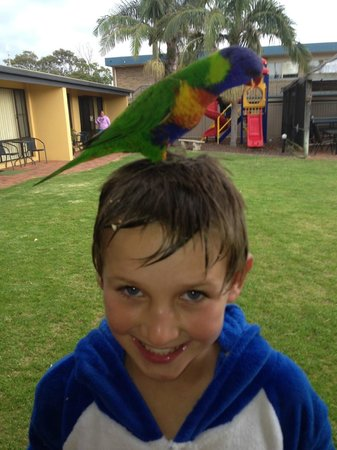 Admirals Lodge: The Rainbow Lorikeets