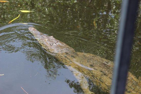 Couples Negril : crocodile tour