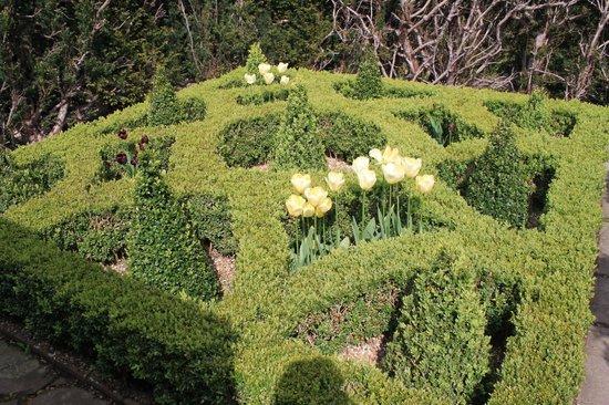 Hever Castle & Gardens : Buchsbepflanzung mit Tulpen