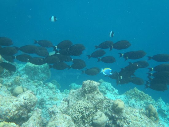 Sun Aqua Vilu Reef: Underwater world