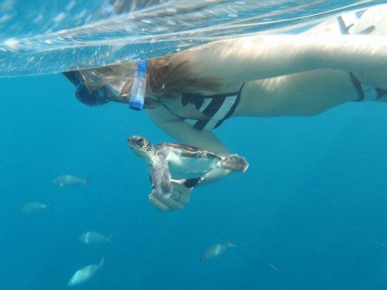 Dhaalu Atoll: Underwater world