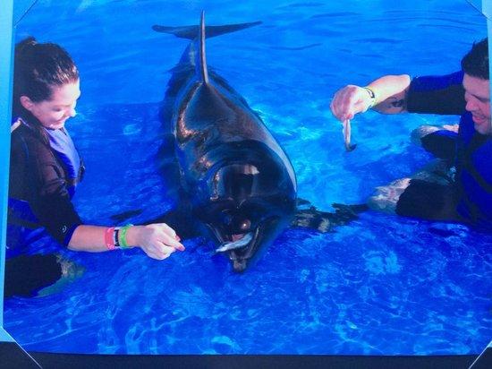 Cabo Adventures : dolphin encounter
