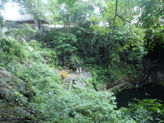 Salto de aprox 5 metros picture of cenote jardin del for Jardin eden
