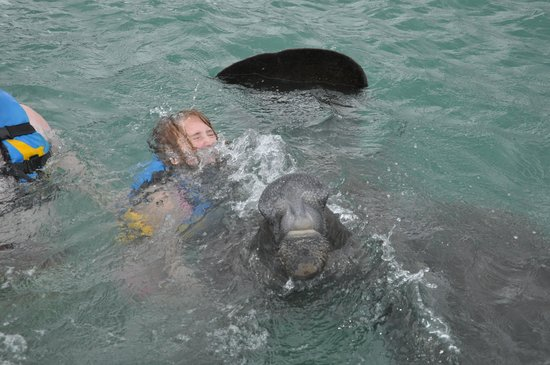 Dolphin Discovery Cozumel : Notice my daughter is nearly drowning and my husband has to hold her in the pic