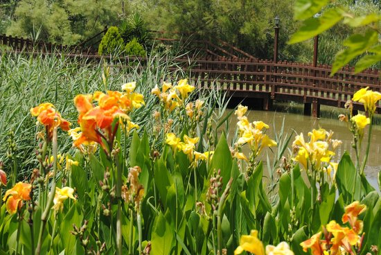Delta Hotel: Jardines y estanque