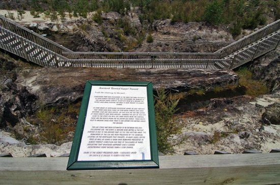 Das älteste, nicht versteinerte Stück Holz der Welt: Kauri Stamm im Gumdiggers Park