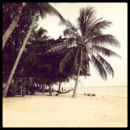 Da Kanda Villa Beach Resort : By the beach in front of resort
