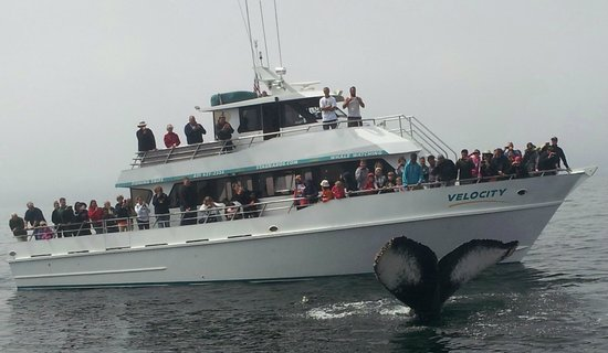 Stagnaro Sport Fishing Charters & Whale Watching Cruises