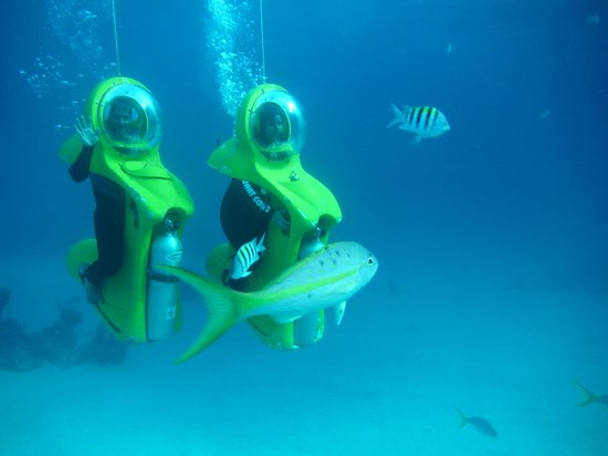 Stuart Cove's Dive Bahamas : Say Cheese 'Under Water' style