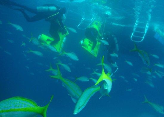 Stuart Cove's Dive Bahamas : Fantastic SUB at Stuart Cove