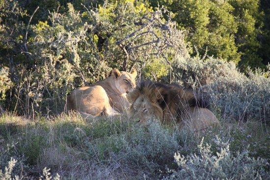 Woodbury Lodge : Mighty Lions