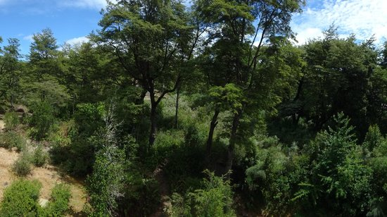 Petrohué Lodge : View of forest and garden from room