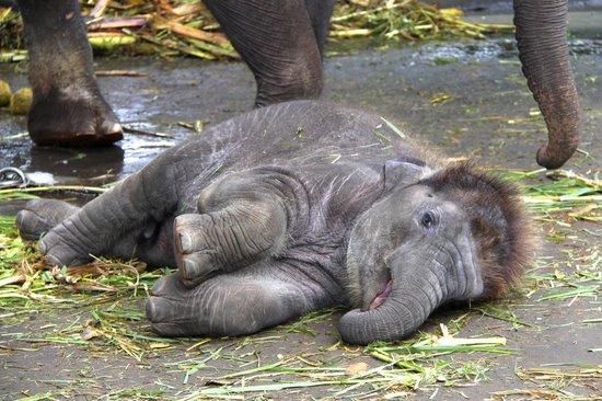 Elephant Safari Park & Lodge: time to wake up