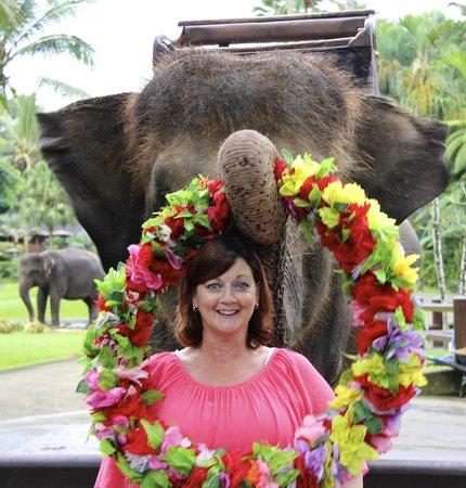 Mason Elephant Lodge: fun photo