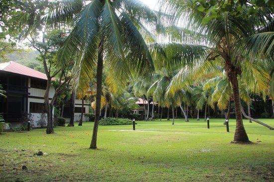 Renaissance St. Croix Carambola Beach Resort & Spa: lawn