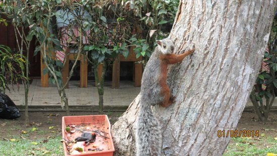 Hotel Mar de Luz: Two-toned squirrel