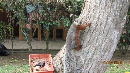Hotel Mar de Luz : Two-toned squirrel
