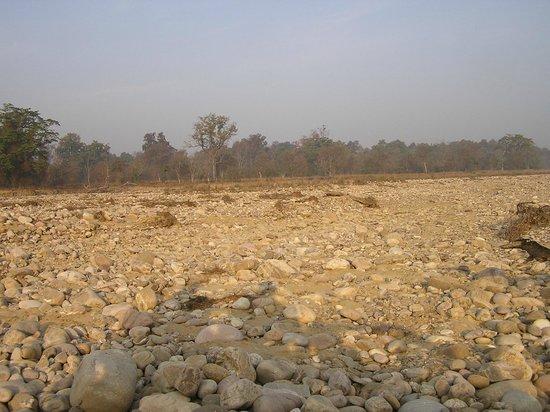 Corbett Safari : river bed
