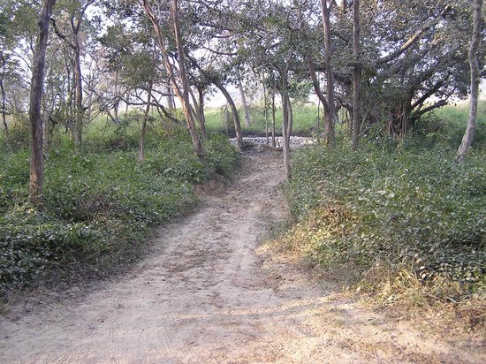 Corbett Safari : on a tiger trail