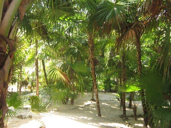 Ixchel Playa & Cabanas: Garden view