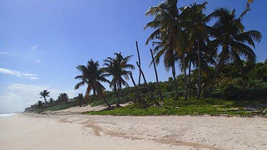 Ixchel Playa & Cabanas: Beach in front of Ixchel