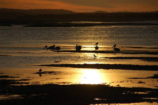 Beachside Retreat West Inlet : Pelicans at sunset