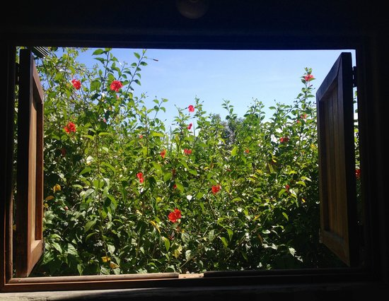 Hotel Luz de Luna: View from the kitchen window