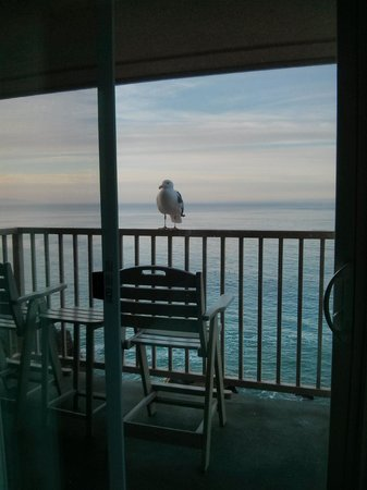 Shore Cliff Hotel: Sunrise. New Best Friend at the Best Western.