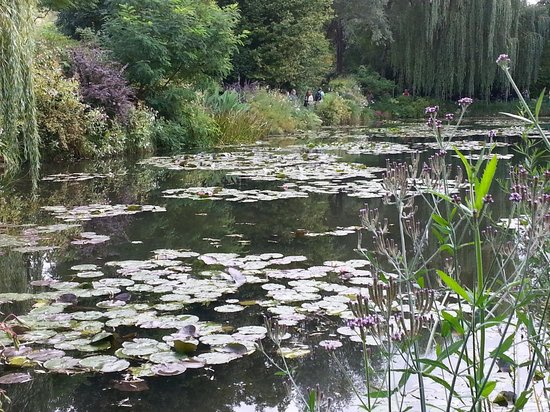 Giverny, France: water lillies