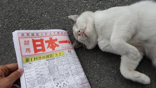競馬 新聞 佐賀
