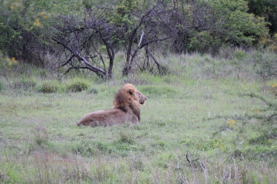 Jock Safari Lodge : Saw the Big 5 multiple times. Saw all five in a single drive one time!