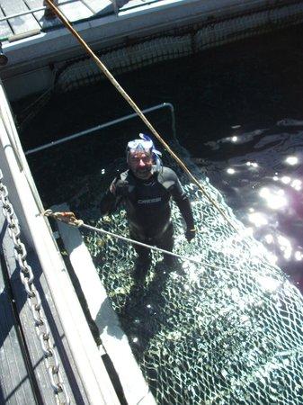 I had a fun time at Swim with the Tuna.