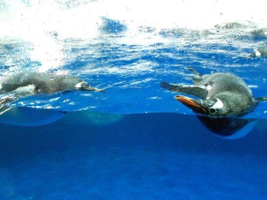 Kelly Tarlton's Sea Life Aquarium: Up close & personal with the penguin