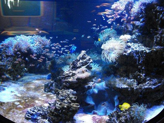 Kelly Tarlton's Sea Life Aquarium: sea creatures up close