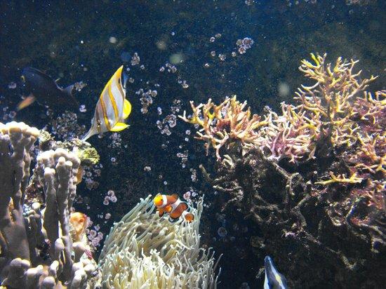 Kelly Tarlton's Sea Life Aquarium: Where is Nemo