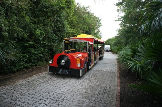 Grand Palladium Colonial Resort & Spa : По территории ездит паровозик