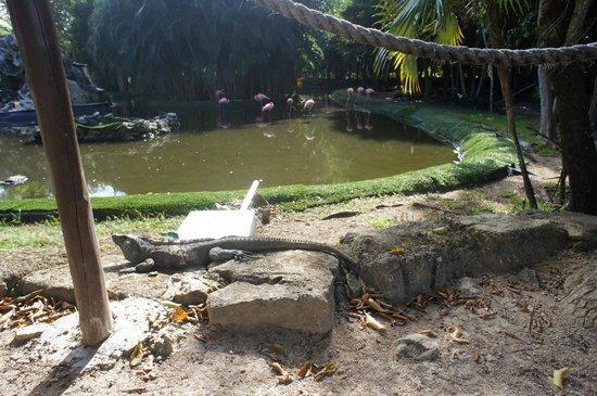 Grand Palladium Colonial Resort & Spa : Фламинго