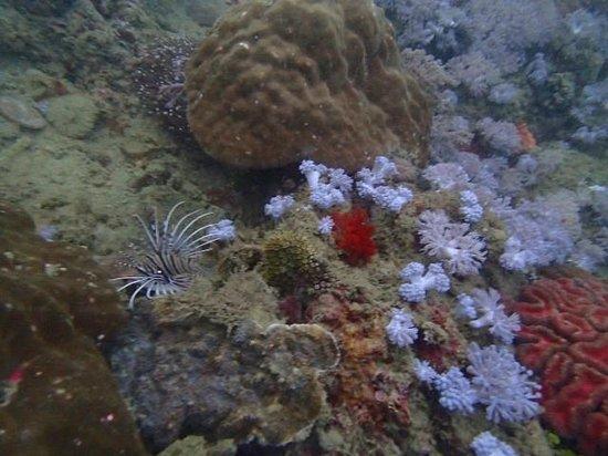 Tuko Beach Resort: beauty of the sea (spot the lionfish)
