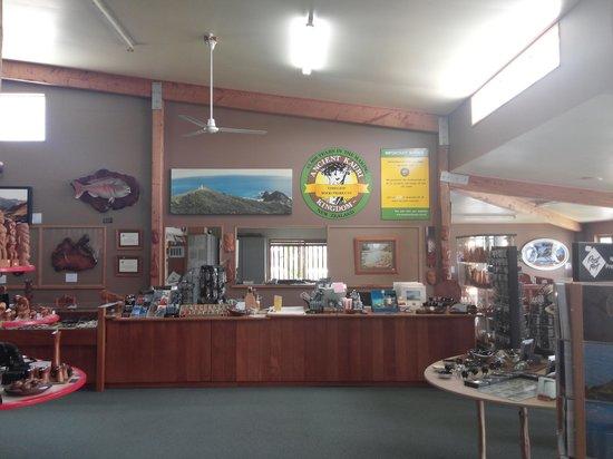 Ancient Kauri Kingdom : front