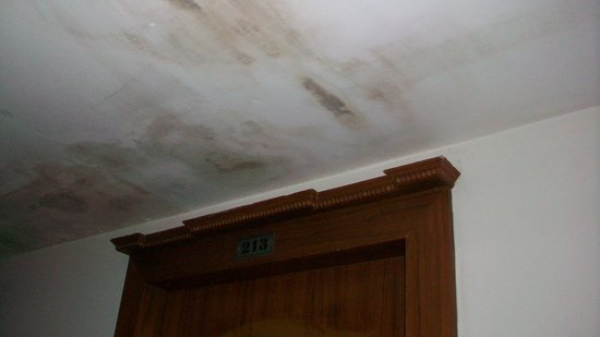 Hotel Kavitha International: Filthy and damp